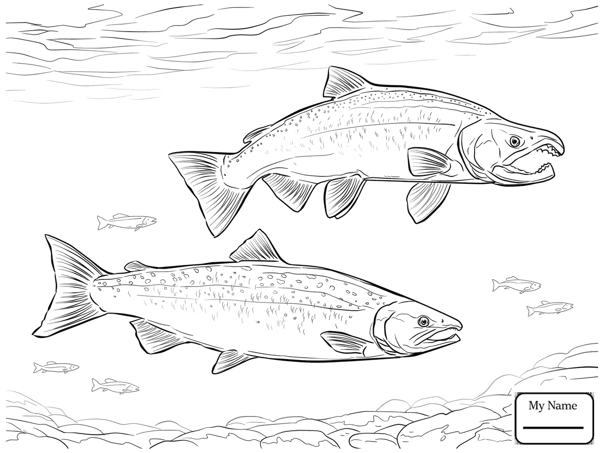 1223x917 Coloring Pages Salmon Fish King Salmon
