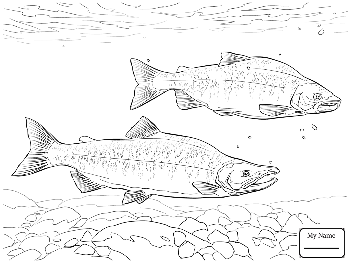 1223x917 Fish King Salmon Salmon Coloring Pages
