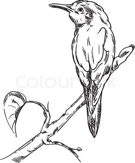 265x320 Drawing Of Common Kingfisher Bird Hold On Twig,vector Illustration