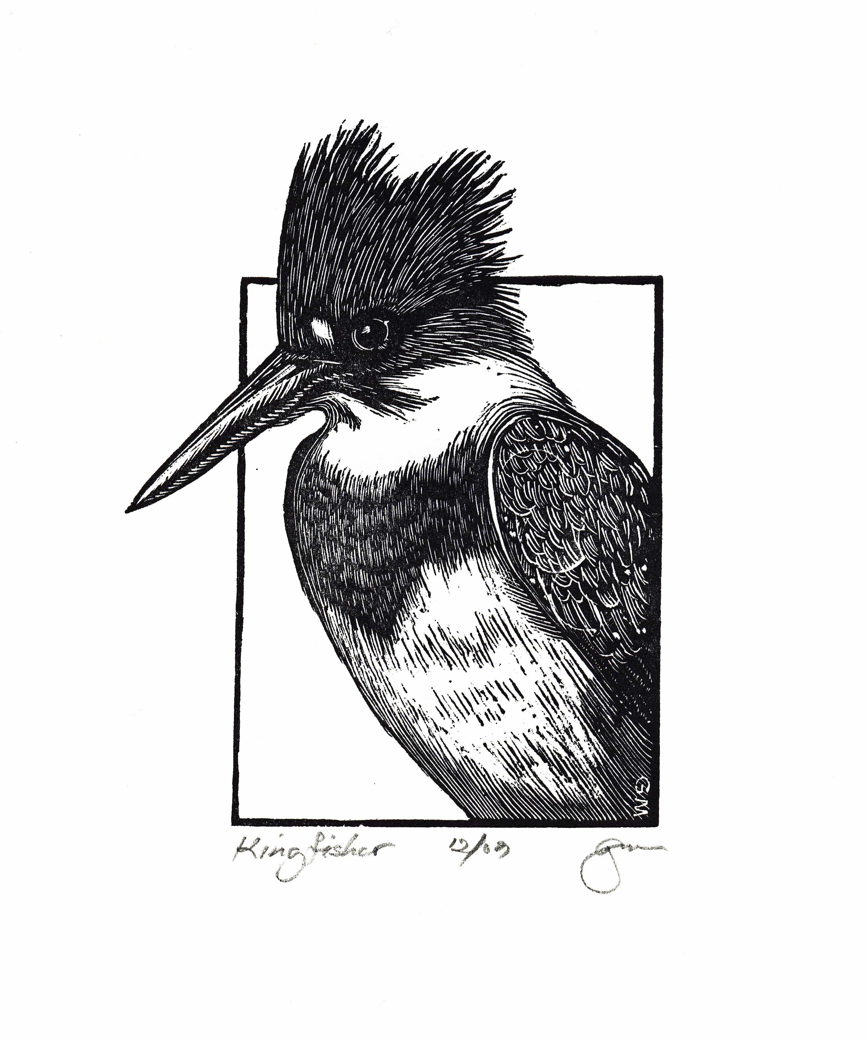 2906x3485 Gale Mueller. Kingfisher. 2003. (Wood Engraving) Breaking