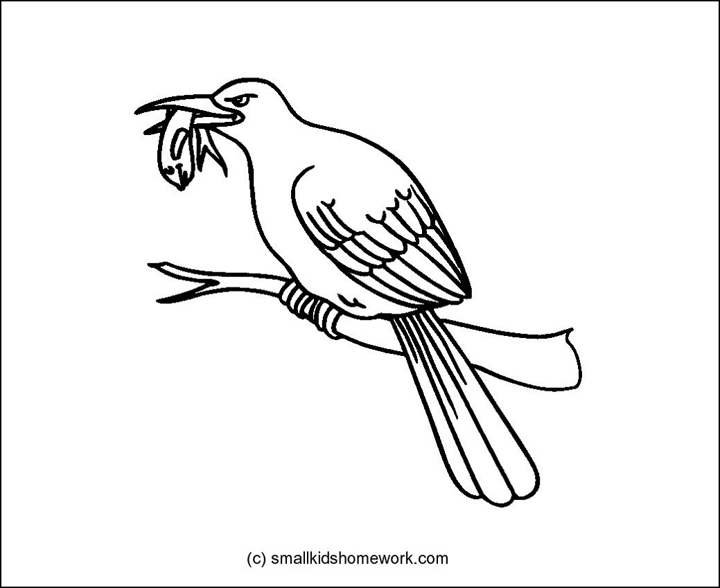 1039x849 Kingfisher Outline And Coloring Picture