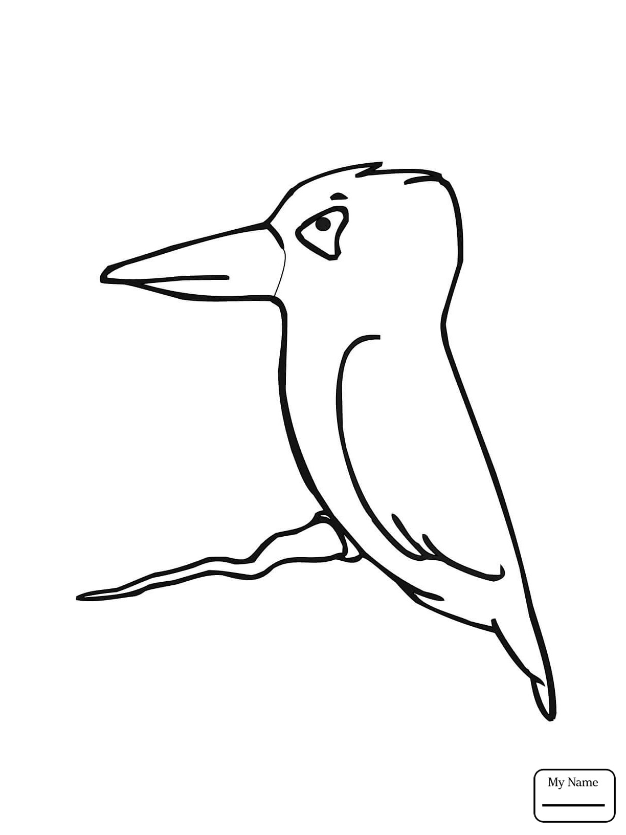 1224x1632 Kingfisher Bird Birds Coloring Pages For Kids