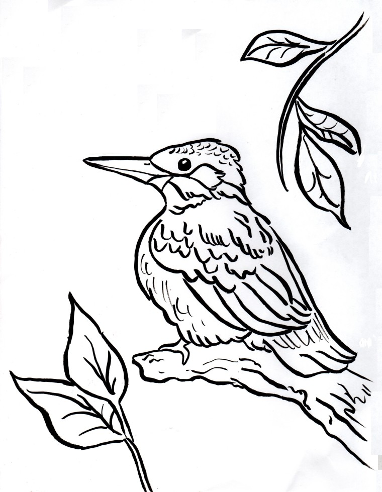 760x979 Kingfisher Coloring Page