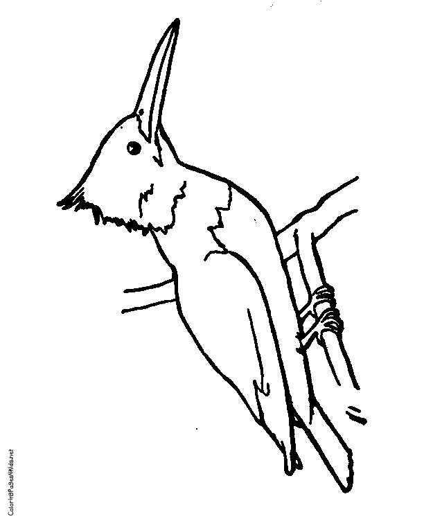 612x762 Kingfisher Outline