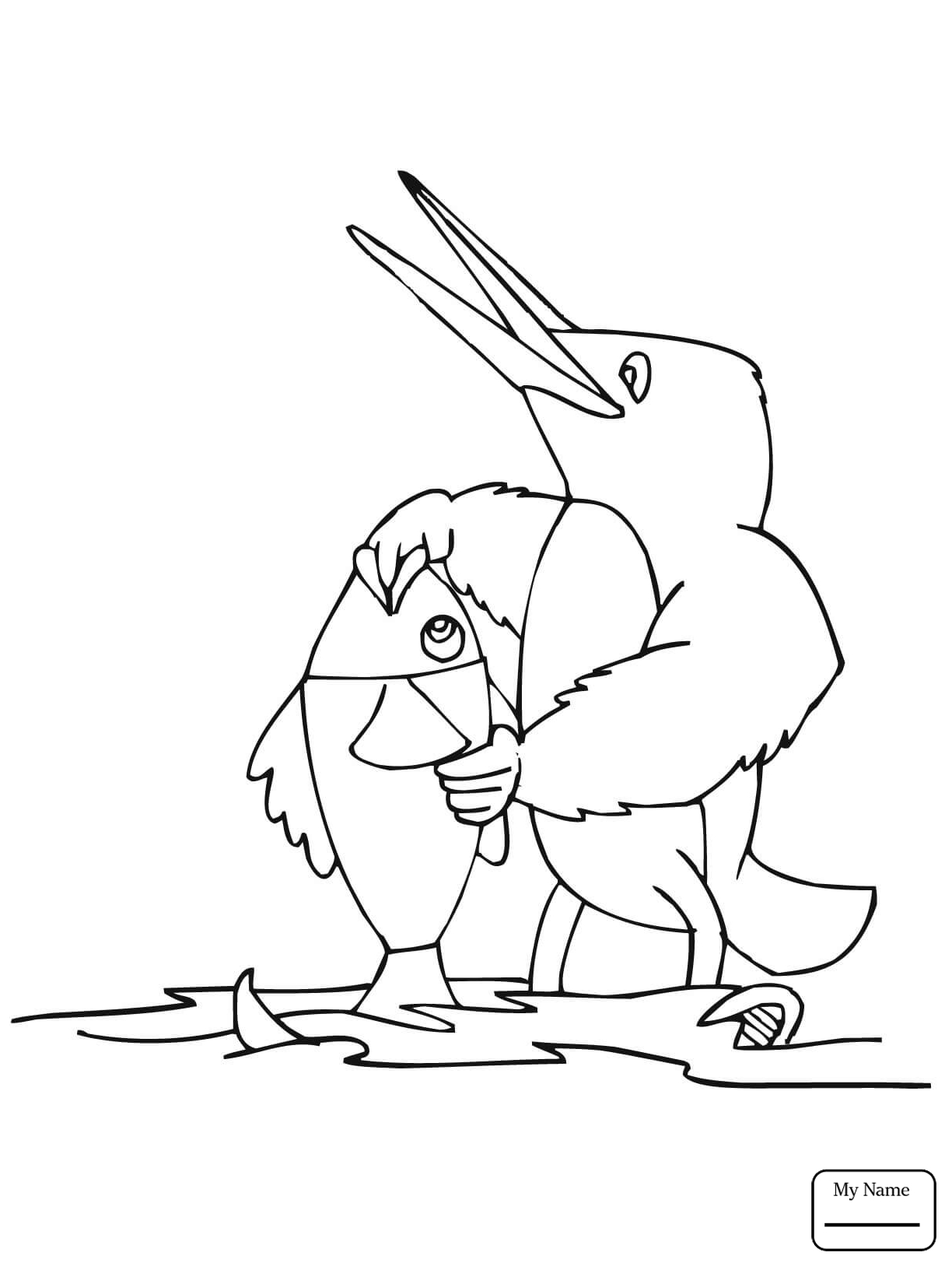 1224x1632 Coloring Pages Birds Belted Kingfisher Kingfisher