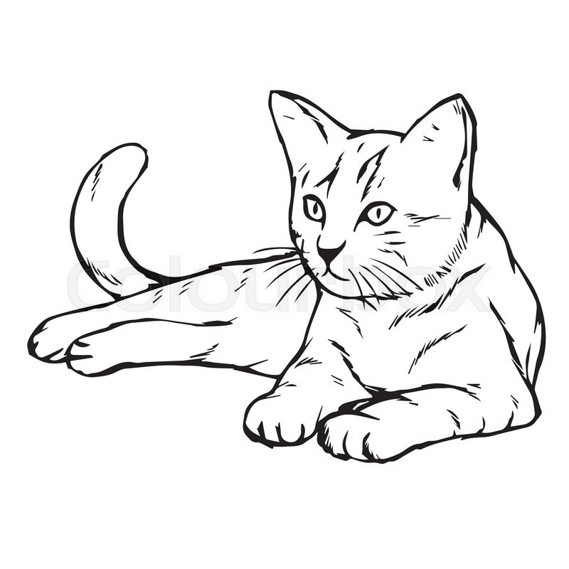 800x800 Freehand Sketch Illustration Of Cat, Kitten Doodle Hand Drawn