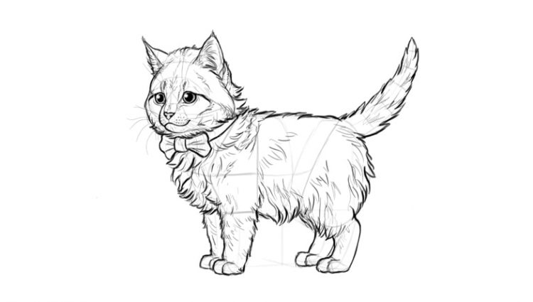 kitten drawing step by step at getdrawings com free for personal