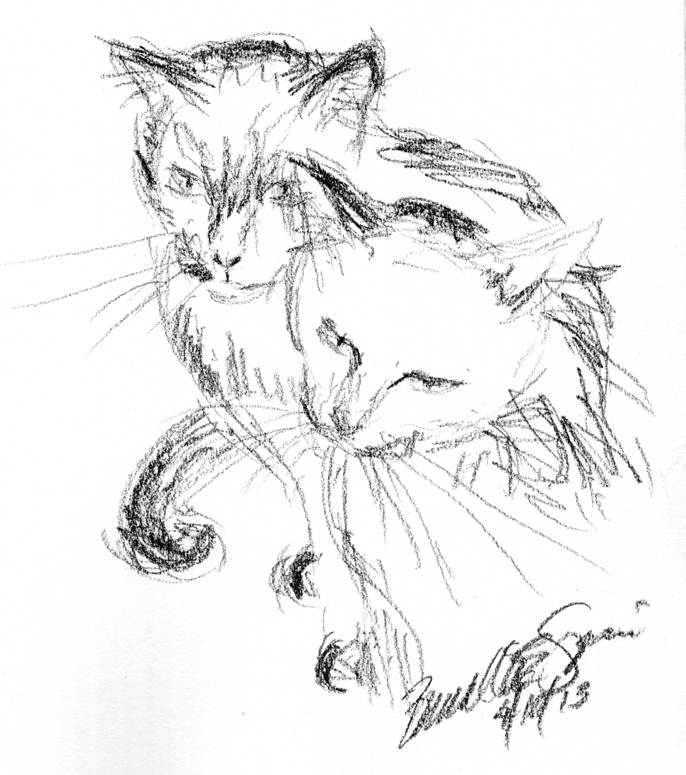 1000x1130 Daily Sketch What ~ The Creative Cat
