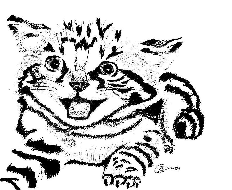 900x737 Kitten Black And White Drawing By Gail Schmiedlin