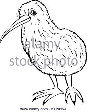 300x384 Doodle Animal For Kiwi Bird Illustration Stock Vector Art