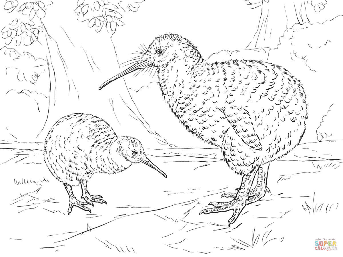 1200x900 Great Spotted Kiwi Coloring Page Free Printable Coloring Pages
