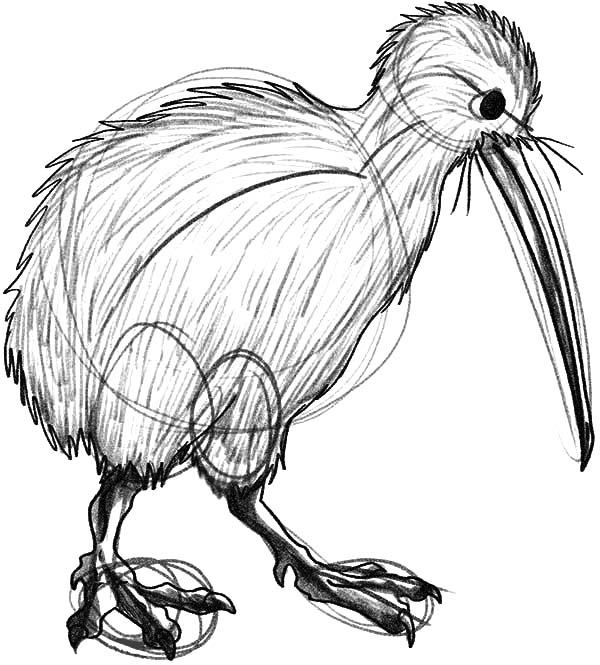 600x665 How To Draw Kiwi Bird Coloring Pages