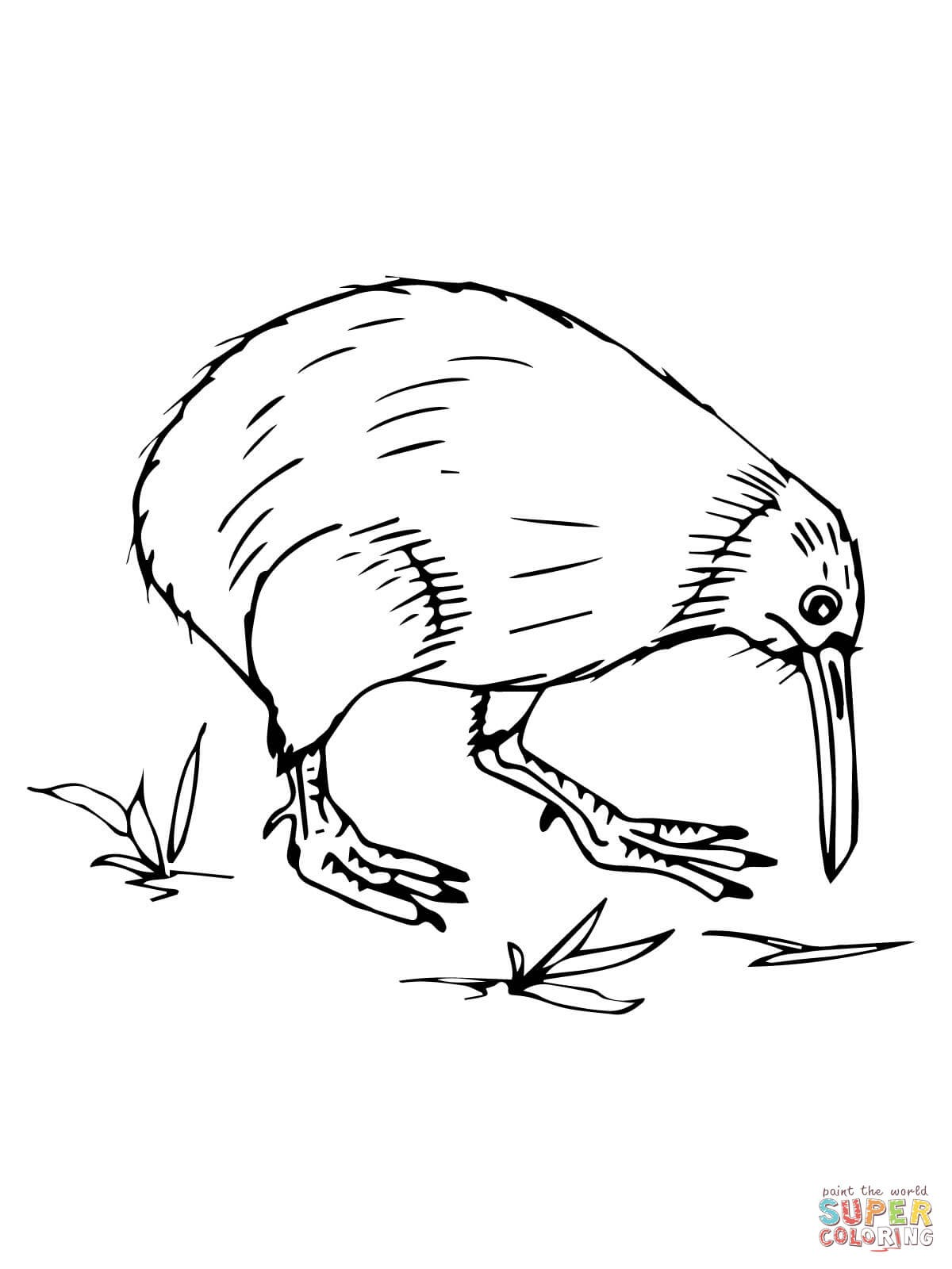 Kiwi bird drawing at free for personal for Kiwi bird coloring page