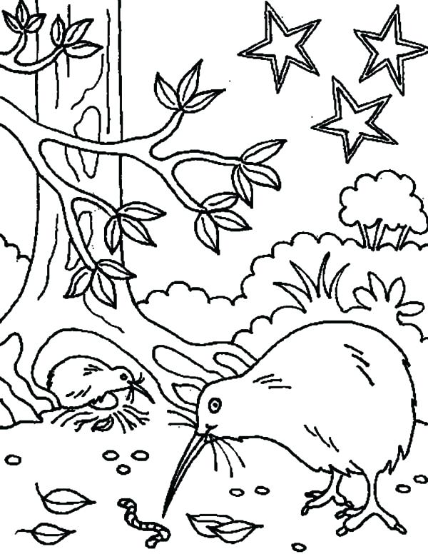 600x783 Kiwi Animal Coloring Pages How To Draw A Kiwi Bird Coloring Pages