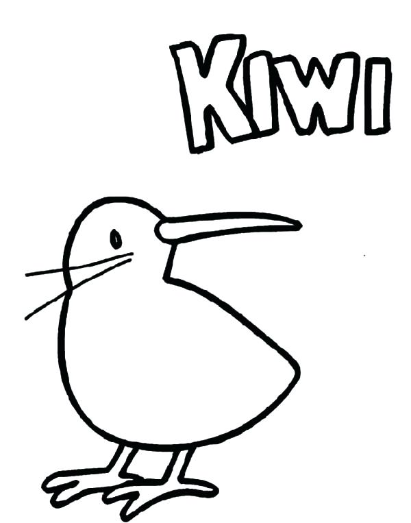 Kiwi Bird Drawing at GetDrawings Free for personal