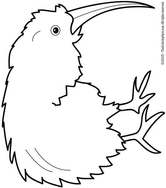 540x613 Kiwi Zentangle Style Coloring Book Adult Stock Vector 704409499