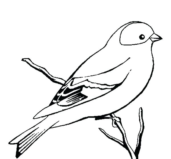 600x558 Bird Color Page Drawing Baby Kiwi Bird Coloring Pages Bird Color