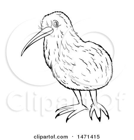 450x470 Clipart Of A Kiwi Bird