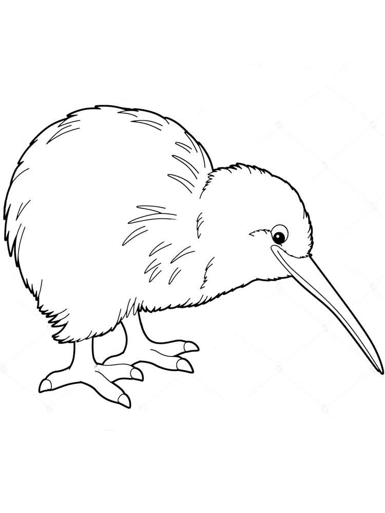 750x1000 Kiwi Bird Coloring Pages