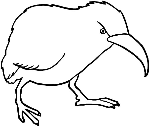 600x506 Angry Kiwi Bird Coloring Pages