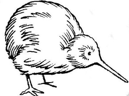 450x335 Kiwi By Blood Dodo