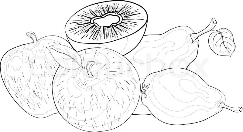 800x435 Still Life, Food, Various Fruits, Contours On A White Background