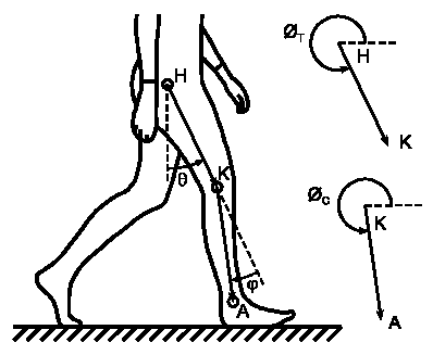 398x327 The Angle Measurement Procedure For Obtaining Thigh And Calf (Knee
