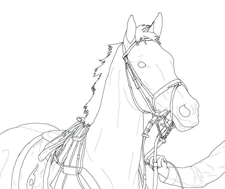 736x620 How To Draw Horses Coloring Page Pretty Horse Coloring Pages
