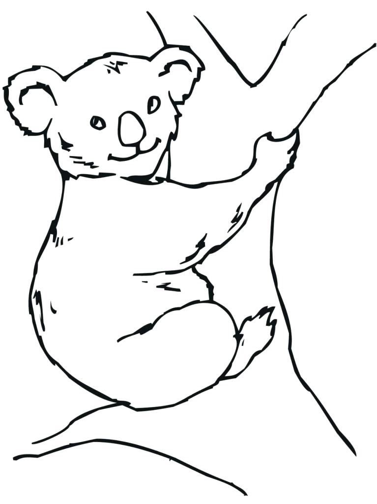 767x1024 Koala Bear Pictures To Color Koala Bear Coloring Pages For Free