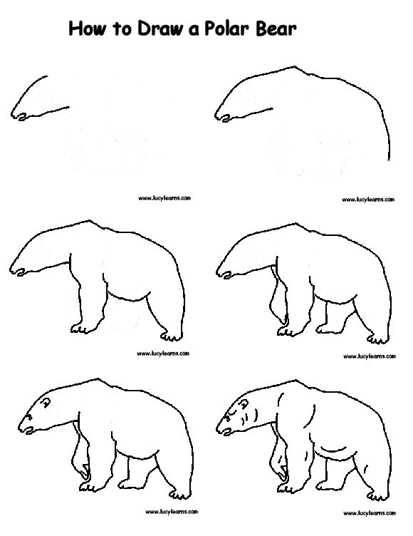 580x752 Drawing Polar Bear. Easy Drawing Of A Bear How To Draw A Polar