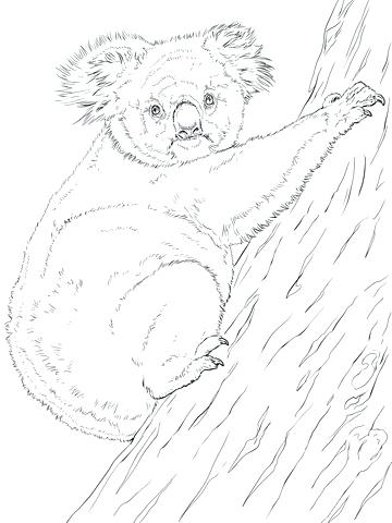 360x480 Koala Coloring Page Koala Bear Mom With Her Baby Coloring Page