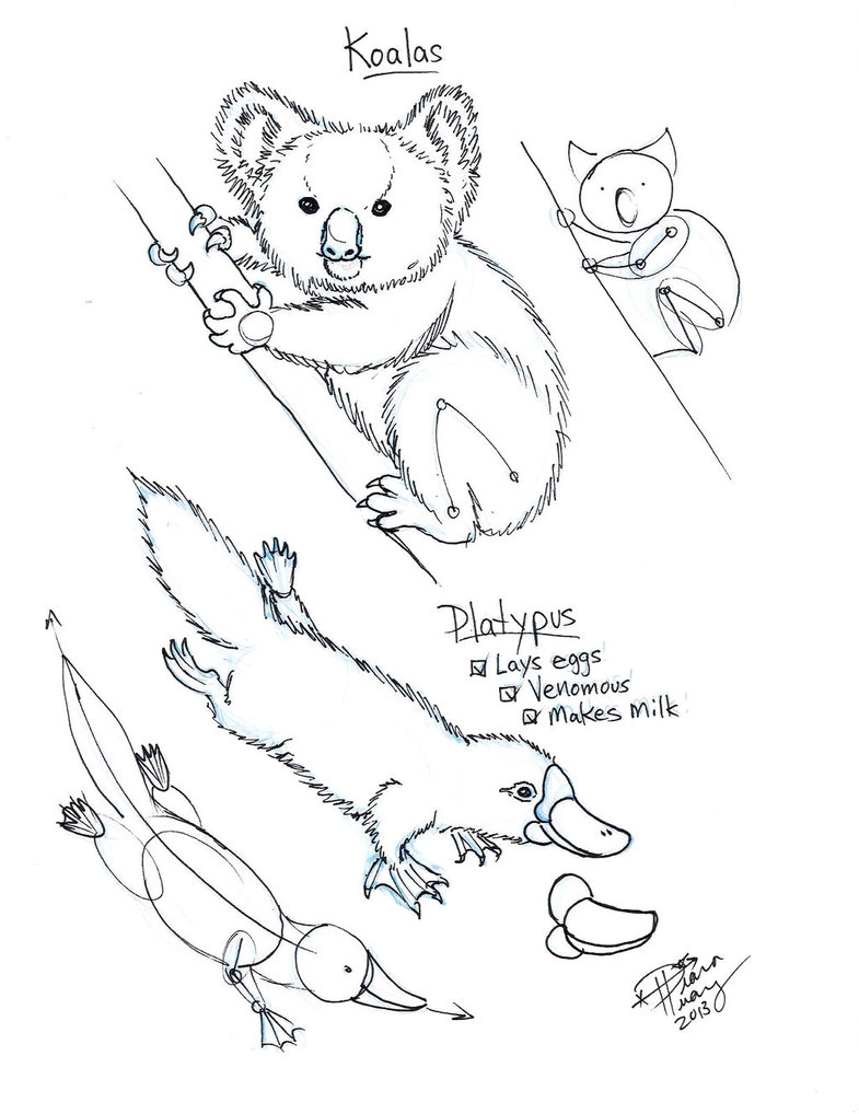 785x1018 Draw Koala And Duck Billed Platypus By Diana Huang