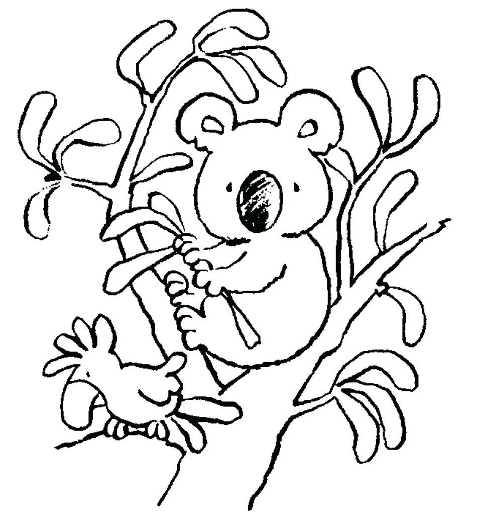 Koala Outline Drawing at GetDrawings | Free download