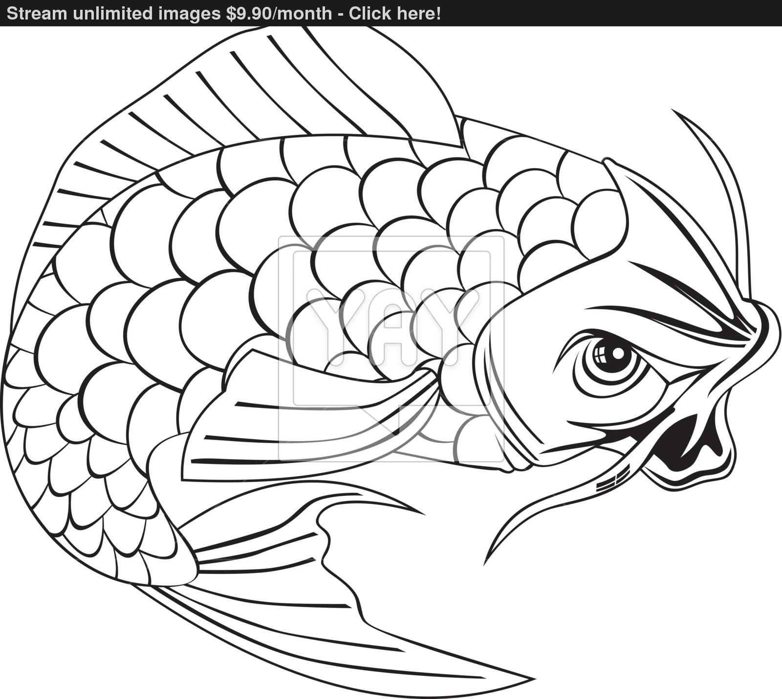 Koi Fish Drawing At Getdrawings Com Free For Personal Use Koi Fish