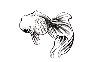 296x205 Collection Of Simple Koi Fish Tattoo Design