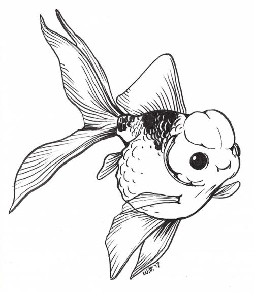 500x577 goldfish breeding tumblr