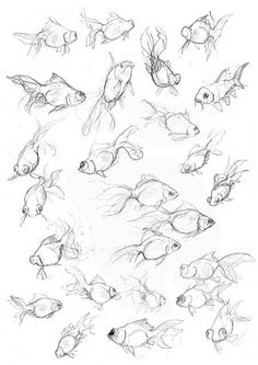 236x333 How To Draw A Koi Fish Printable Drawing Sheet By