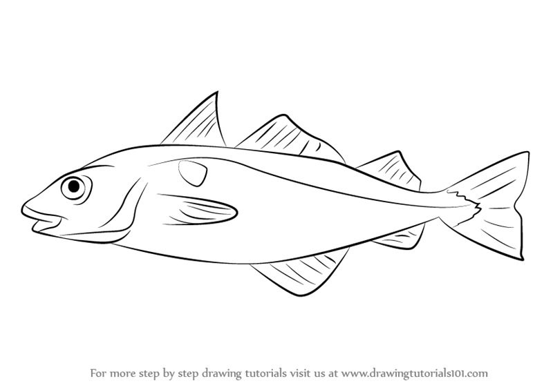 800x565 Learn How To Draw A Haddock (Fishes) Step By Step Drawing