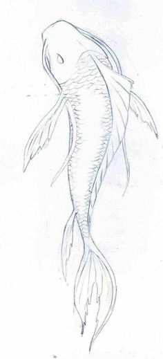 236x519 Learn How To Draw A Koi Fish (Fishes) Step By Step Drawing