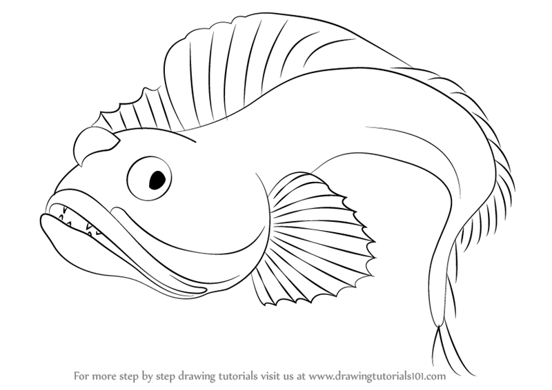 800x566 Learn How To Draw A Sarcastic Fringehead (Fishes) Step By Step