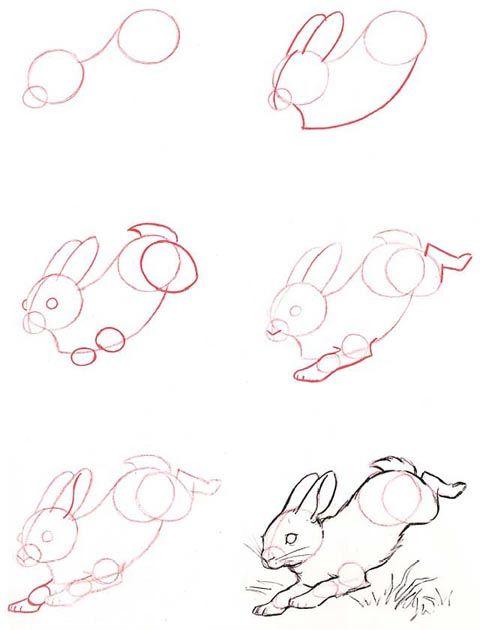 480x630 Dibujar Animales Paso A Paso