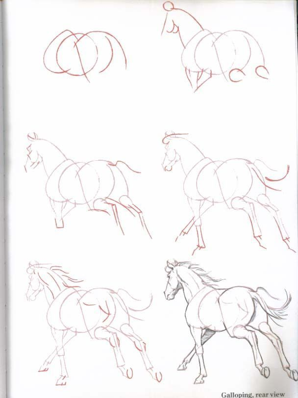 608x812 79 Best Drawing Tutorials Animals Images On Drawing