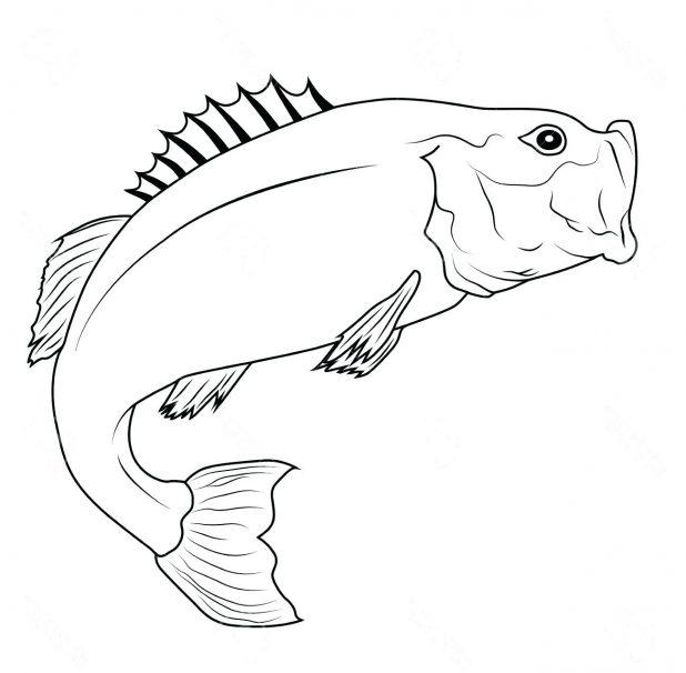 618x606 Coloring Fascinating Fish Outline Drawing. Koi Fish Drawing