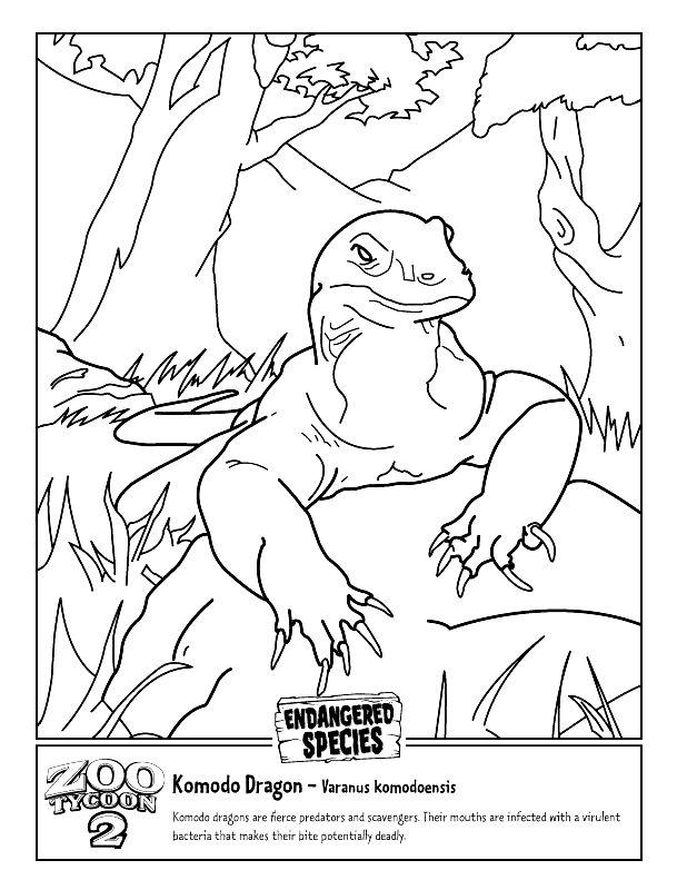 Komodo Dragon Drawing