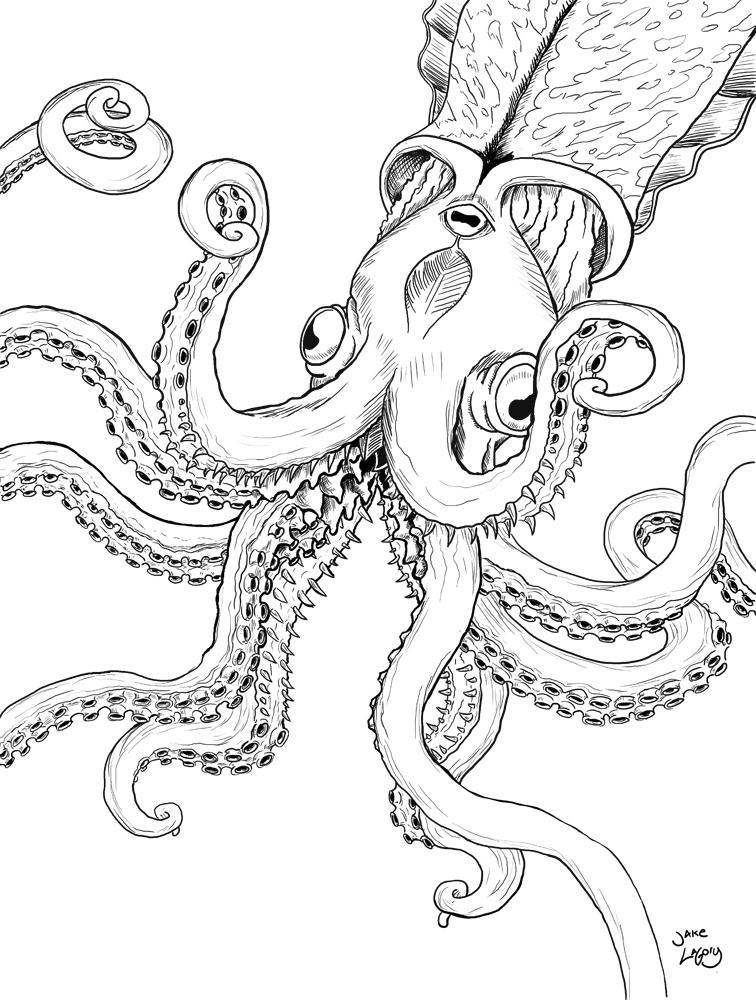 756x1000 Jake Lagory Illustrator Cryptozoology Coloring Book Kraken