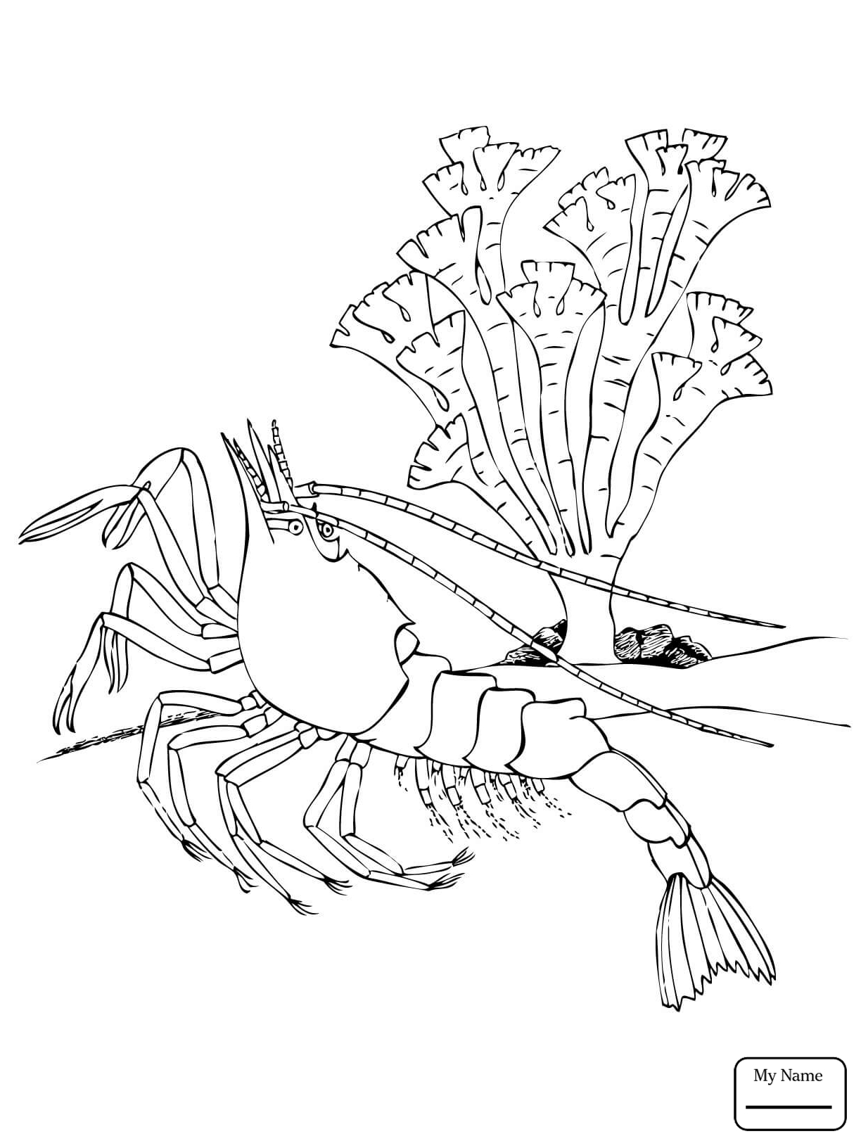 1224x1632 Krill Coloring Page Squid Coloring Pages