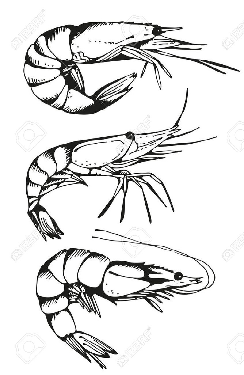 848x1300 Krill Stock Photos. Royalty Free Business Images