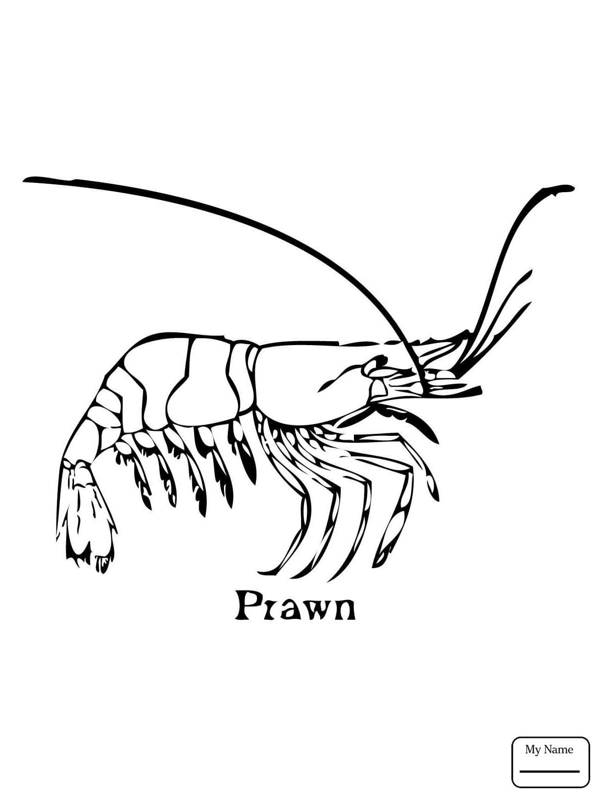 1224x1632 Coloring Pages Northern Krill Crustacean