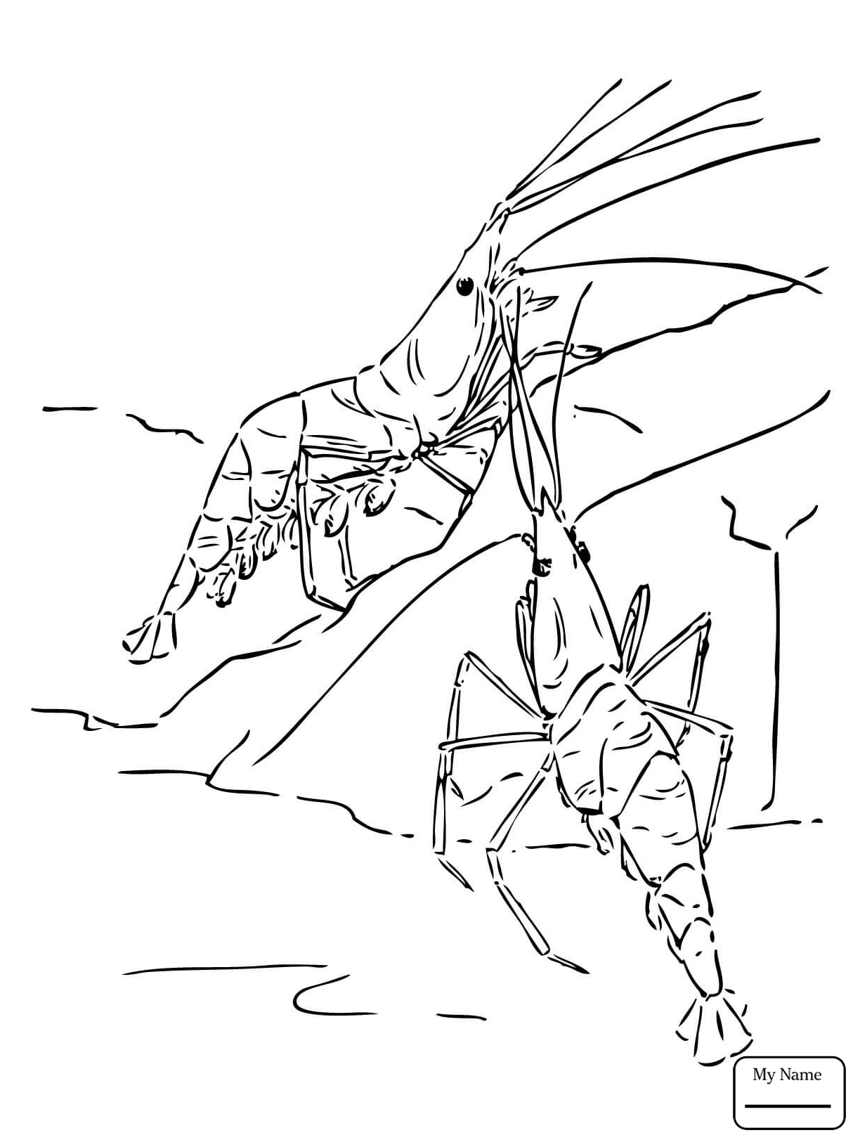 1224x1632 Crustacean Northern Krill Coloring Pages For Kids