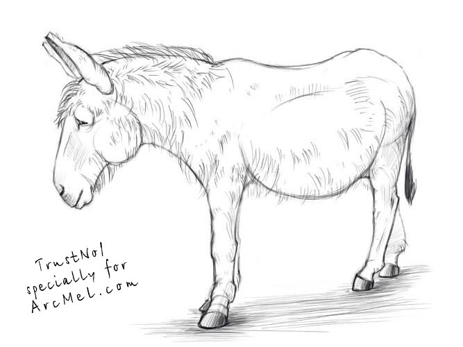 667x500 How To Draw A Donkey Step 5 Art Donkey, Drawings